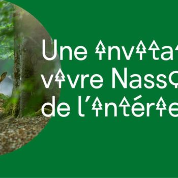 Nassonia